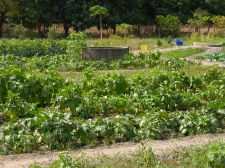 Técnico Agrícola en el área de Cassamance