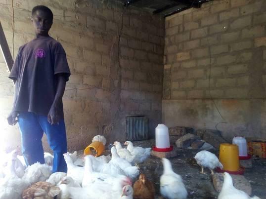 Granja de pollos en Oussouye